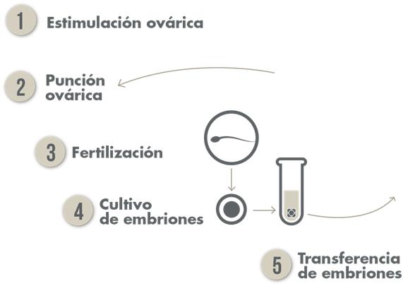 Etapes de Traitement de Fécondation in Vitro