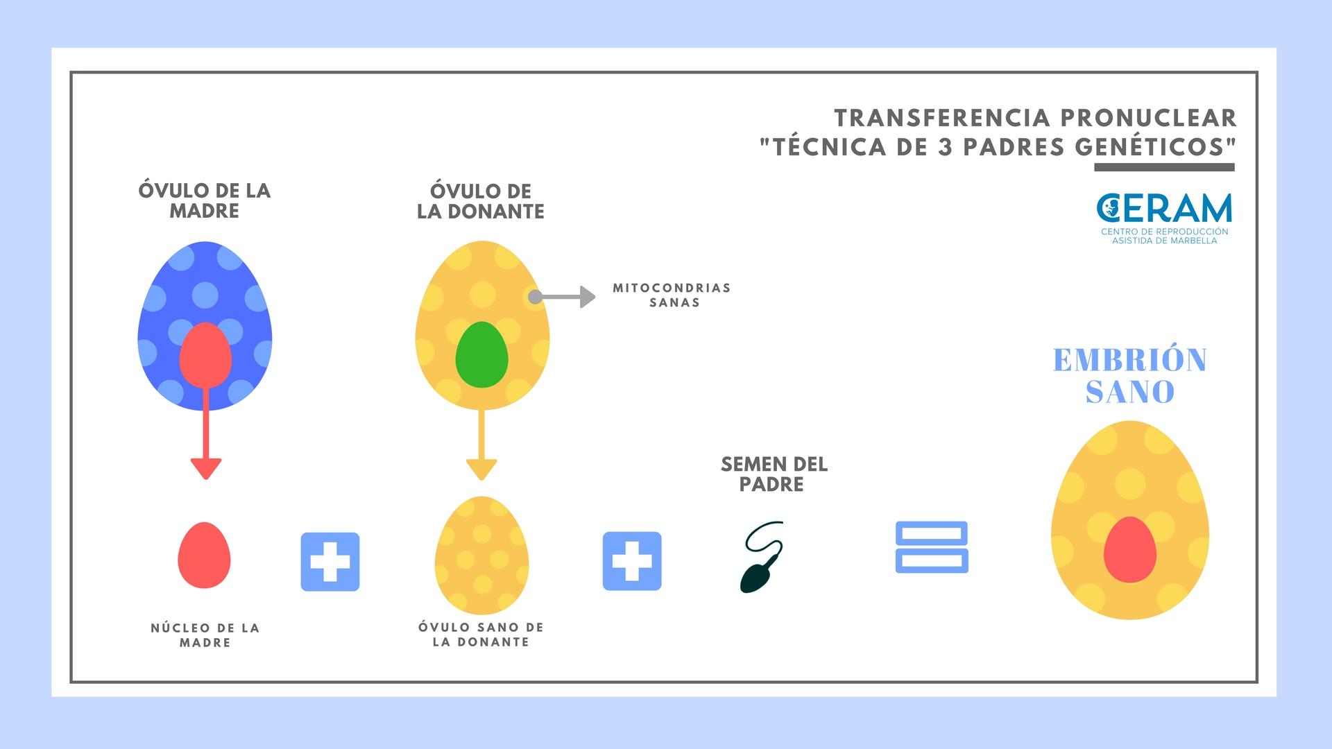 tecnica-de-3-padres-geneticos-esquema