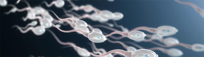 Macs técnica de selección de esperma